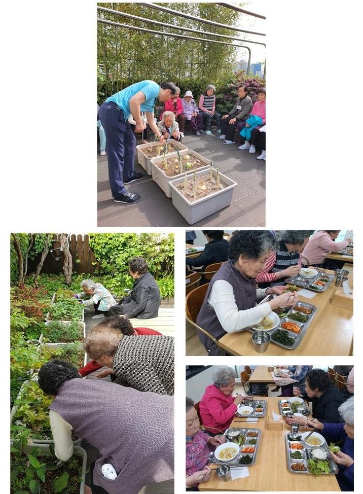 [데이] 사회적응훈련-상추 수확하기