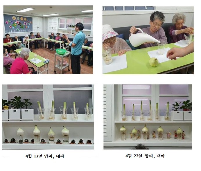 [데이] 사회적응훈련 -양파, 대파 수경재배